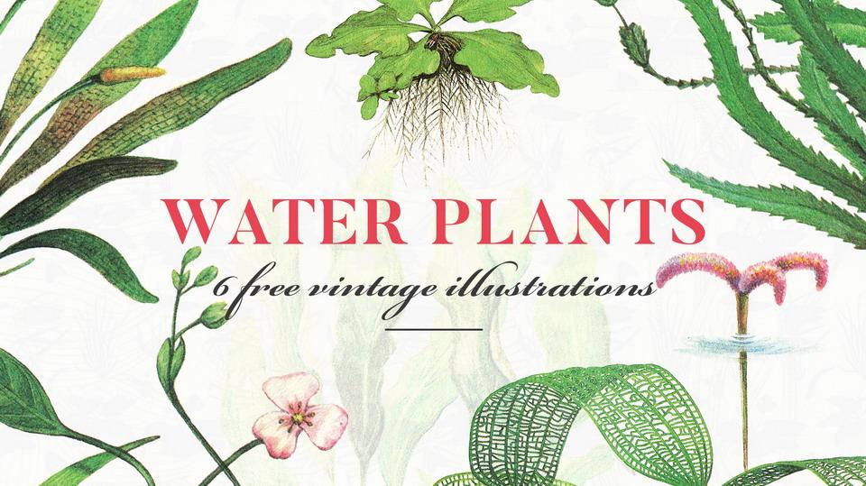 water_plants