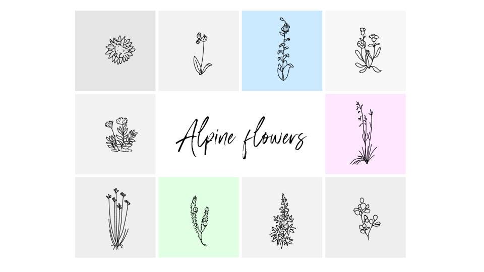 alpinine_flowers